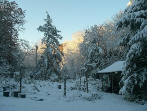 A Berkshire garden caught before clean-up in the blizzard / ice storm of October 2011.