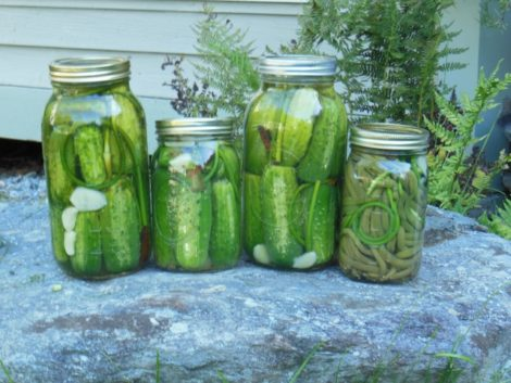 Lacto-fermented cucumbers and green beans with garlic scapes, September 5, 2015. Photo: Judy Isacoff