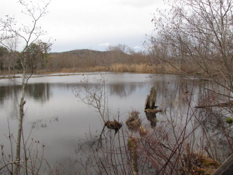 The Audubon Society's Canoe Meadows Wildlife Sanctuary in Pittsfield will be subject to a cleanup of PCBs.