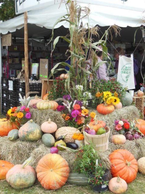 The Fedco Seed display at The Common Ground Fair, Unity, Maine, September 25, 2015. Photo: Judy Isacoff