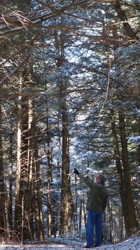 Pignatelli points to the forest canopy of hemlocks.