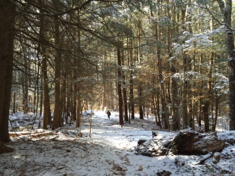 Otis State Forest, where Tennessee Gas Pipeline had planned to expand its pipeline network into Connecticut. Photo: Heather Bellow