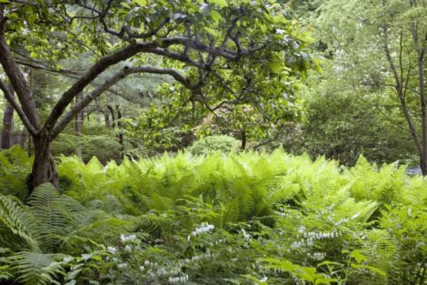 The fern garden, created in the later years of Henriette Suhr's life with the aide of fern expert Dr. John Mickel, demonstrates how gardens can continually evolve and also tells us when it makes sense to seek advice from neighboring experts.