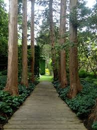 An allée of cryptomeria dwarves visitors as they pass through to the next garden.