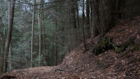 A path through Otis State Forest. Photo: Ben Hillman