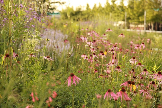 British designer Sarah Price applies the principles set forth in Claudia West and Thomas Rainer's book to the land, creating gardens that are lively and whose composition is painterly and anything but static as plant communities work together to create a balanced landscape.