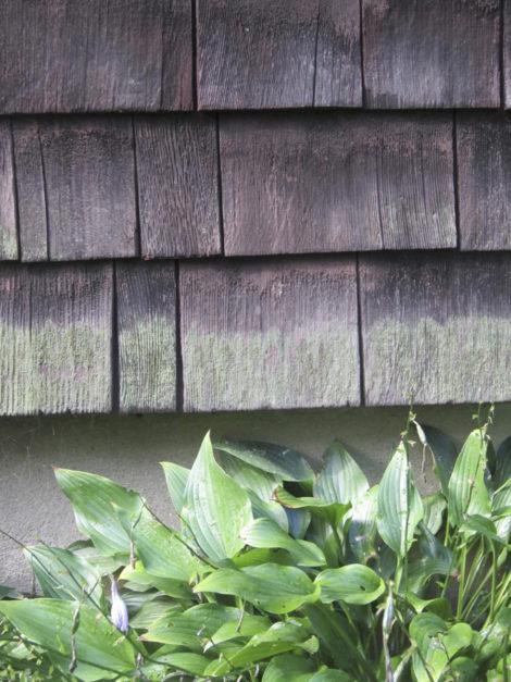 Mossy 100-year-old shingles. Photo: Thomas RC Hartman