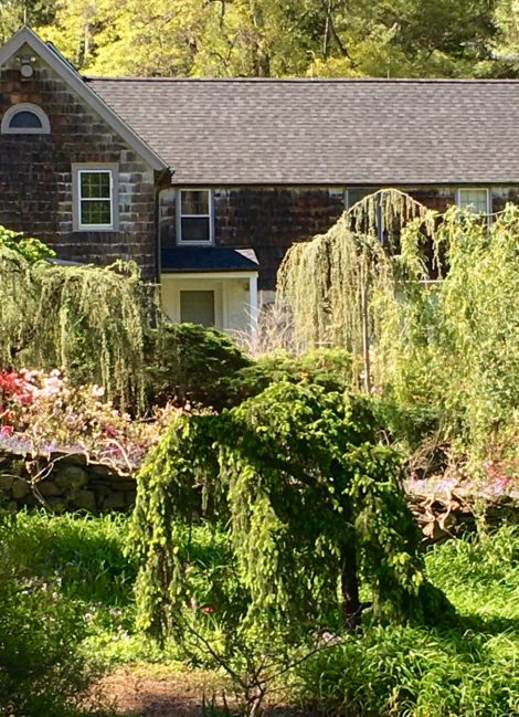 A variety to weeping conifers share add to the romantic setting of Rocky Hills. Photo: Lee Buttala