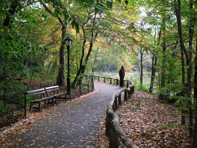 The shoreline path of the Central Park Ramble.