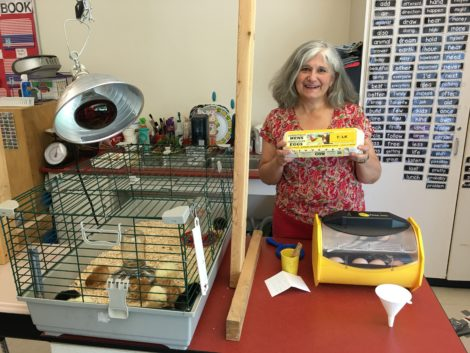 Fourth grade teacher Susan Ebitz with the paraphernalia of the Yolk Project.