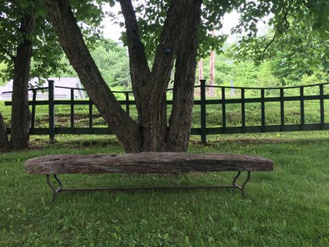 This bench from Campo de Fiori has a nice Mesquite seat that nicely complements the bark of the Hawthorn tree in front of which it sits. Photo: Lee Buttala