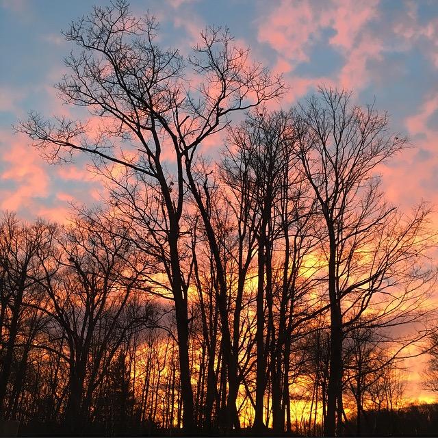 Treetorial-photo-credit-Elizabeth-Schanz