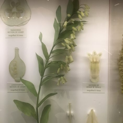 Solomon's Seal.... rendered in glass more than a century ago. Photo: Lee Buttala