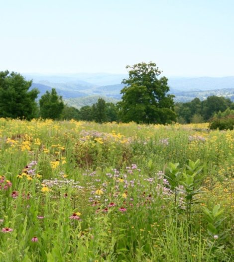 This meadow, designed by Larry Weaner, shows the mimics the glory of nature and will evolve over the years as plant species find their equilibrium and as conditions change.