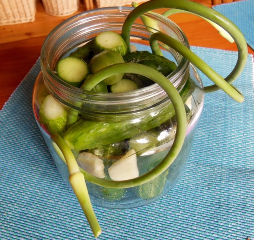 Set-up for lacto-fermented cucumbers with garlic scapes ready to be tightly packed on August 6, 2016. Photo: Judy Isacoff.
