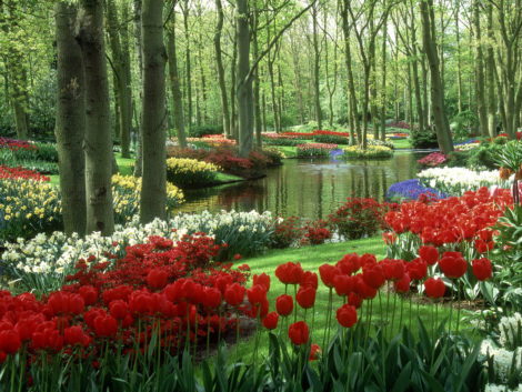 A trip to the Keuekenhof in the Netherlands is like visiting Oz. Flowers are planted in huge Technicolor swaths that seem like they belong in a fairy tale or an MGM movie.