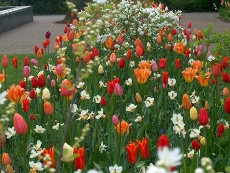 Garden designer Jacquelyn van der Kloet uses bulbs randomly and casually to connect together perennial plantings and to give these areas a boost of early season color.