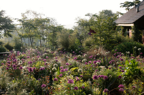 Jimi Blake uses bulbs both in clusters in his borders and as singletons throughout the garden.