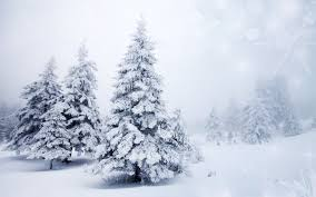 photo-2-blue-spruce