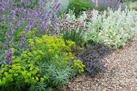 A dry gravel garden requires less maintenance because the lack of water helps to keep weeds down. Plants are selected for their adaptation to such conditions.