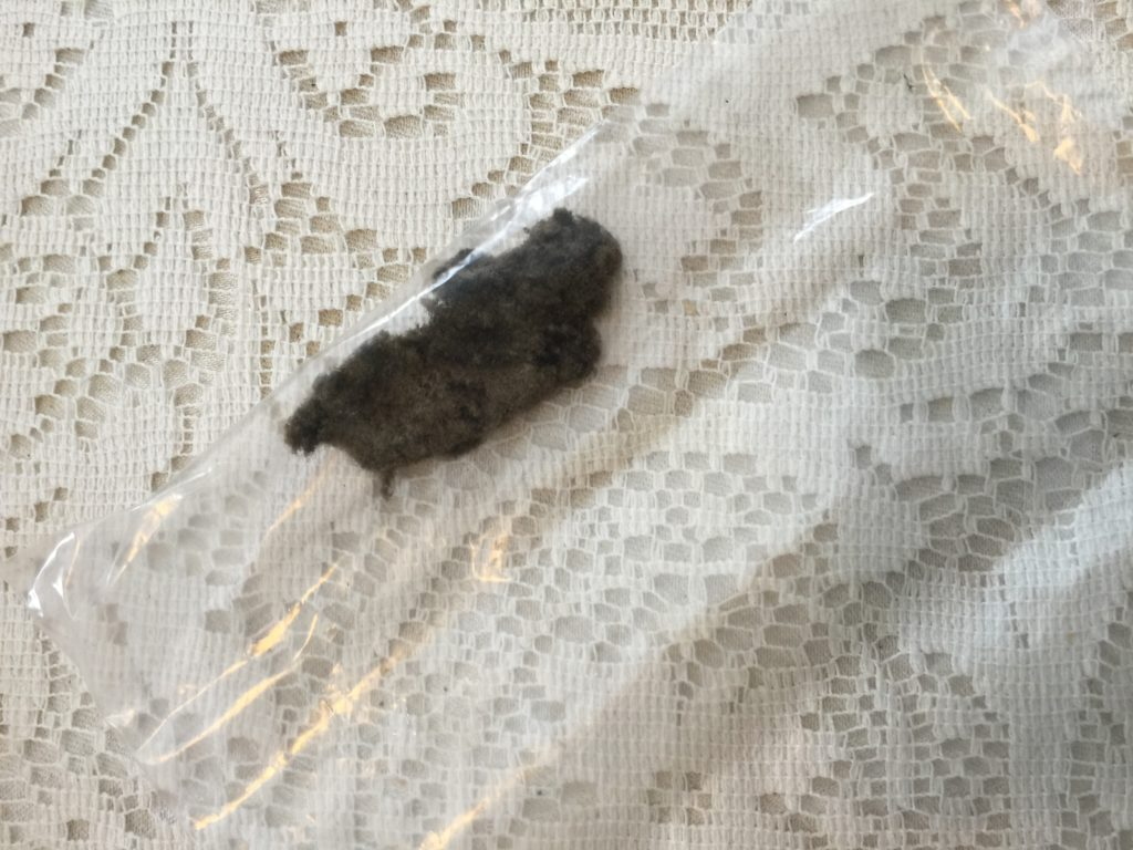 Blanchard said this is mold-encrusted debris taken from the bathroom exhaust fan. It is going to a lab for analysis. Photo: Heather Bellow
