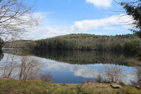 Lower Spectacle Pond in Otis State Forest. Photo: Terry Cowgill