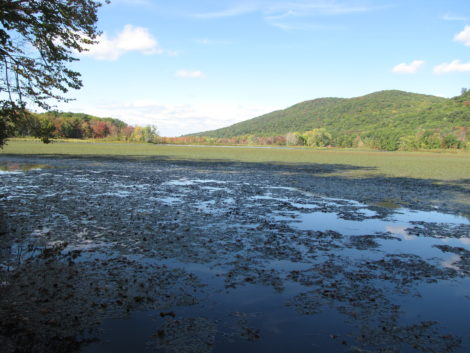 Woods Pond in Lenox Dale, Mass., that harbors a significant PCB impoundment. Photo: David Scribner