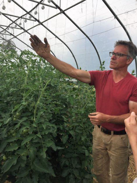 Jim Schultz showing his tomato growing trellis system. Photo: Emma Bailey Ryan