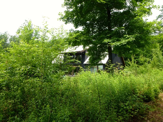 The black Pool House, nestled into its site. Photo: Rich Holben