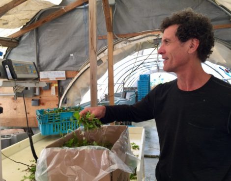 Equinox Farm owner Ted Dobson weighs greens headed for Kripalu Center for Yoga & Health in Stockbridge.