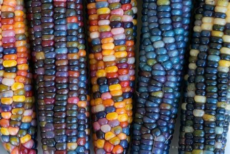 PHOTO 4 -Corn-option 2