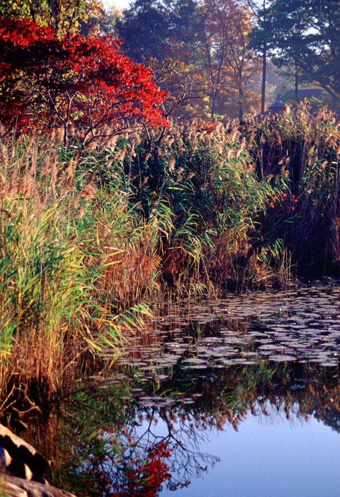 Stockbridge Bowl Ferns by Steve Blanchard of West Stockbridge, Mass.