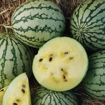 In my opinion, 'Petite Yellow' watermelon has a more subtle taste than some red-fleshed varieties.