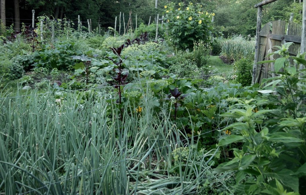 NATURE'S TURN: Harvest and reseed  Revel in flowers, relish