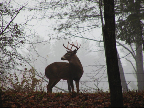 FIELD NOTES: The science behind 'deer season'