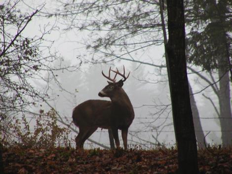 FIELD NOTES: The science behind 'deer season'