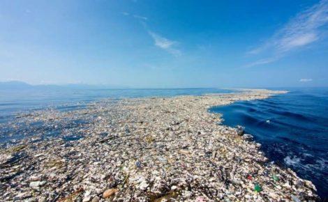 AMPLIFICATIONS: A plastic life