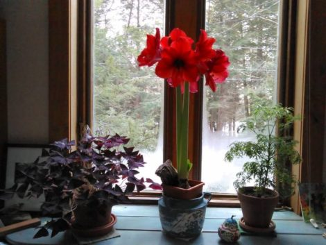 NATURE'S TURN: Firewood, flowers, forage for freezing days and nights