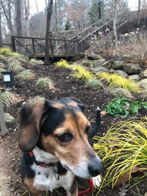 The Self-Taught Gardener: Winter Tour