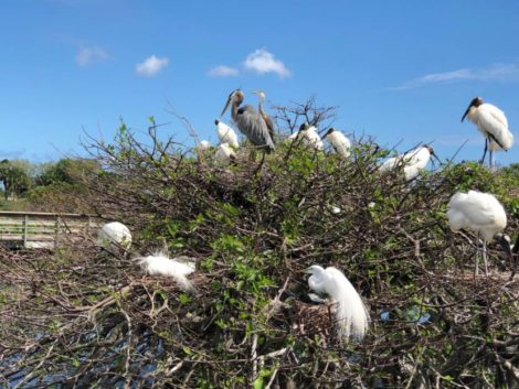 NATURE'S TURN: Praise Berkshire winter – and south Florida oases for wildlife, human spirit