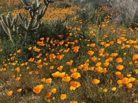 The Self-Taught Gardener: The California Gold Rush