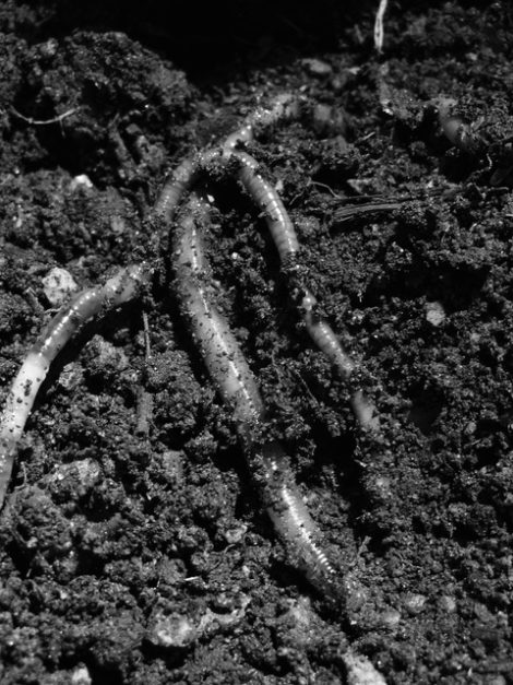 NATURE'S TURN: Seek improved biological activity, soil structure, nutrient balance