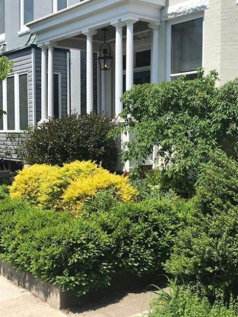 The Self-Taught Gardener: Division Street