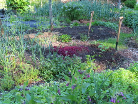 NATURE'S TURN: Polyculture, no-till garden tour