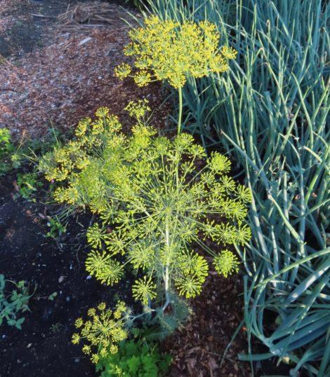 NATURE'S TURN: August turnover: garden digest