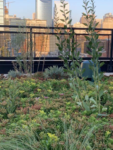The Self-Taught Gardener: Rooftop dancing