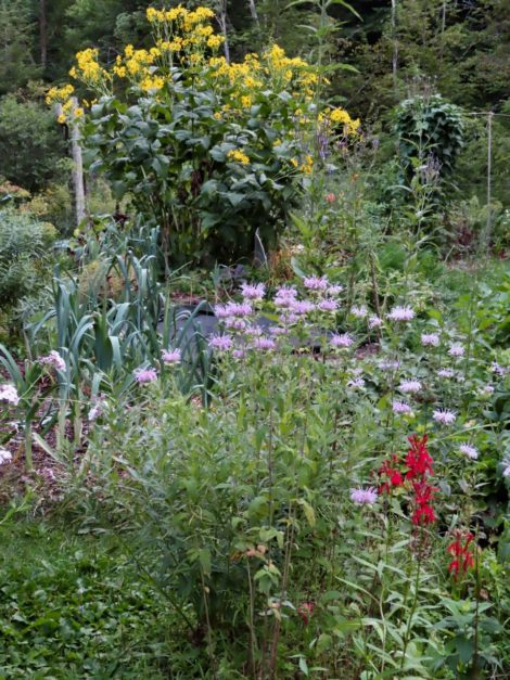NATURE'S TURN: Cover crops for the home gardener