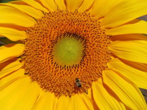 NATURE'S TURN: Peak summer flowers, fruits and foes