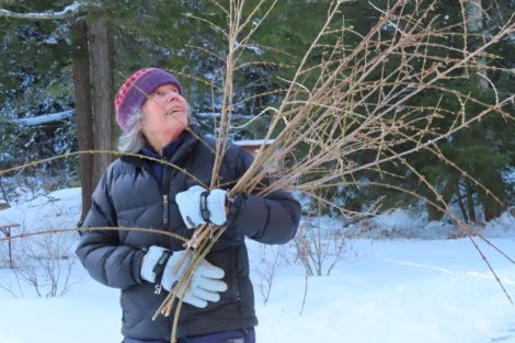 NATURE'S TURN: Flowers and forage for mid-winter holidays