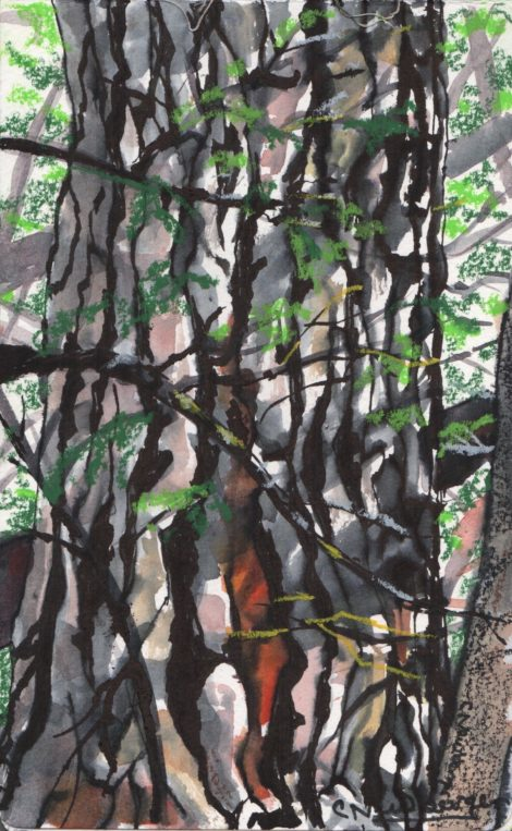 Illuminating the Hidden Forest, Chapter 29: Trees and the art of aging